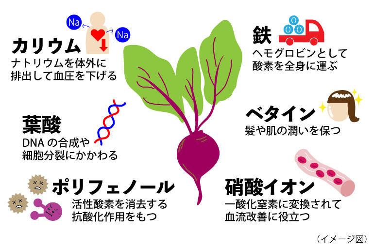 ビーツの豊富な栄養素.jpg