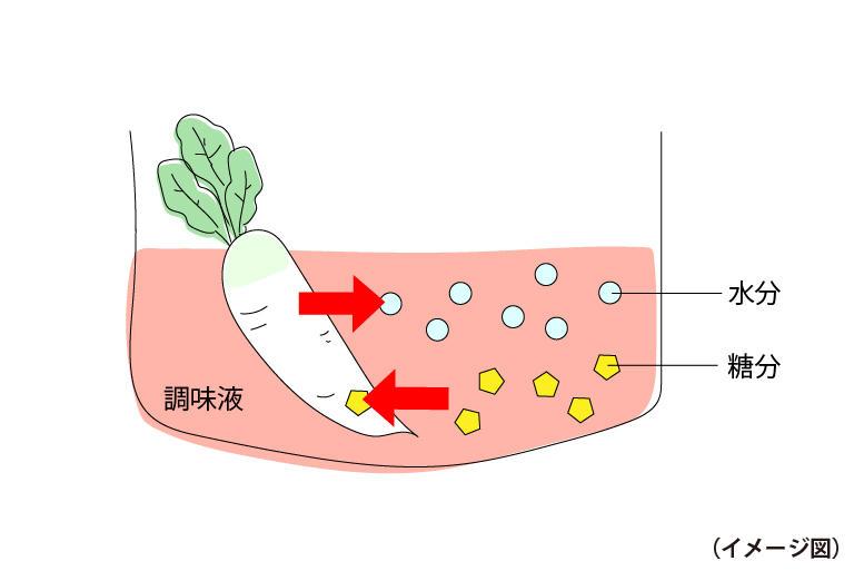 漬け物の浸透圧.jpg