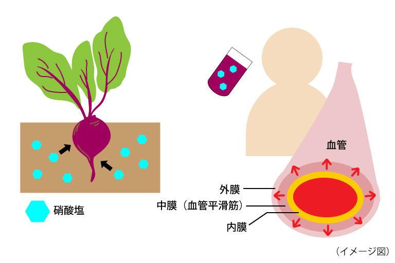 血管拡張.jpg